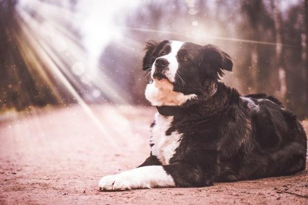 Bubeck-Hund-Licht