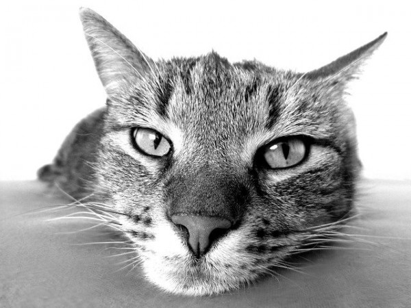 Bubeck-Katze-frisst-nicht
