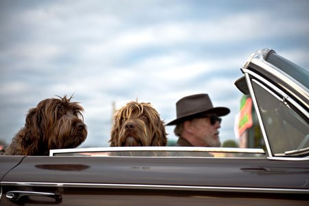 Bubeck-Hunde-Auto