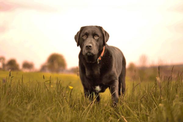 Hund-700_467