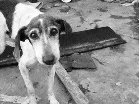 Bubeck-Hund-Traurig