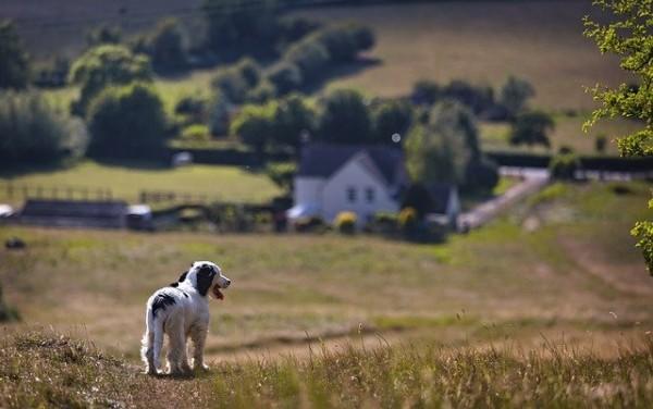 Bubeck-Hund-Haus