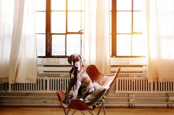 Bubeck-Hund-Wohnung
