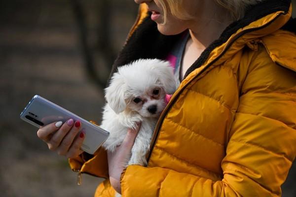 Bubeck-Hund-App