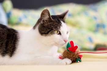 Bubeck_Katze_Spielzeug