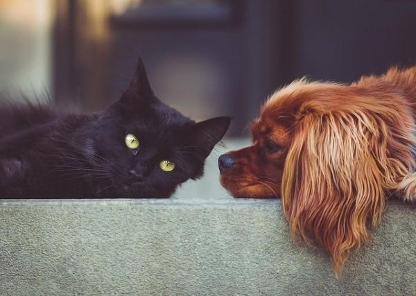 Bubeck-Hund-und-Katz