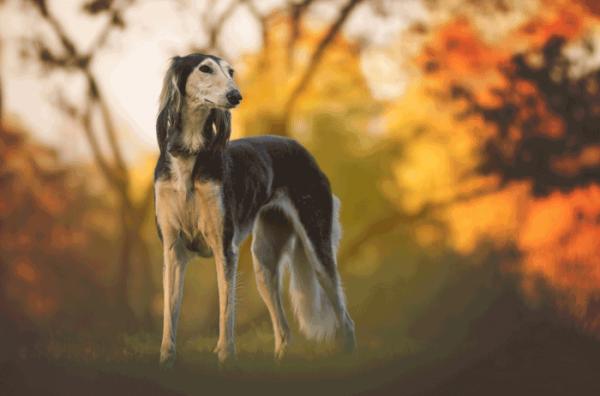 Hund_700_462