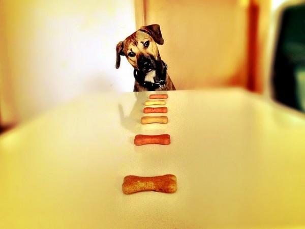 Bubeck-hund-fressen