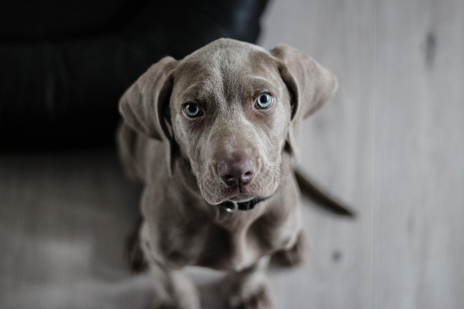 Wundpflege Und Wundbalsam Für Hunde Und Katzen