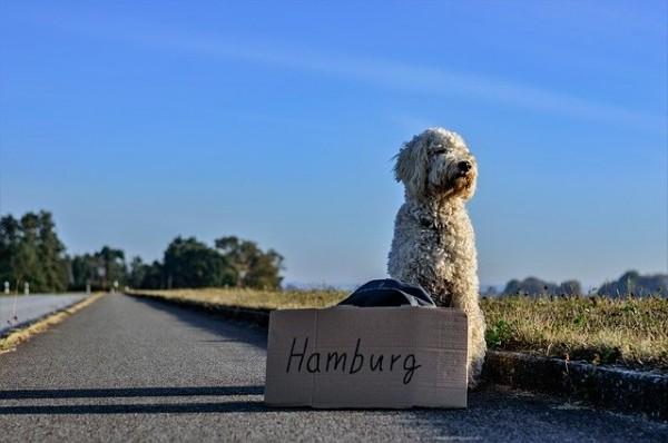 Bubeck-Hund-Tramper