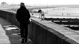 Mann-Hund-Meer