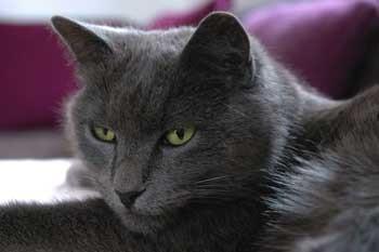 Bubeck-Karthaeuser-Katze