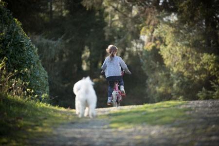 Fahrrad-Hund-Bubeck41Ue8h4fMqCv4