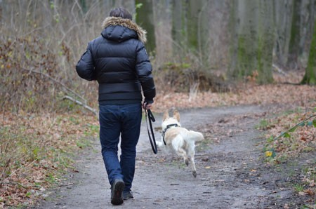 Wald-Hund-Bubeck