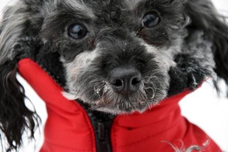 Hund-mantel