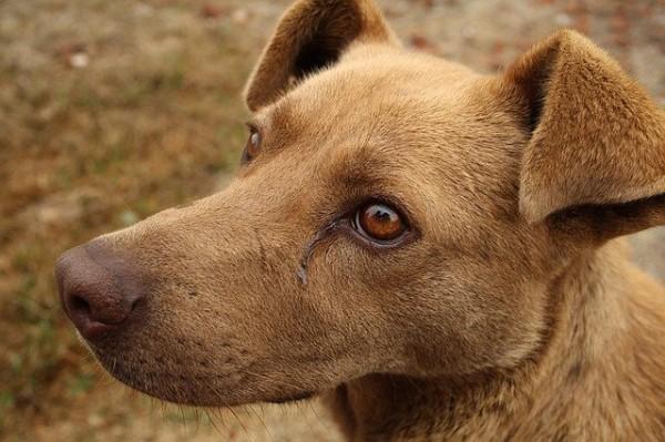 Bubeck-Hund-staube