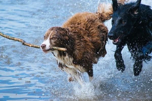 Bubeck-Hund-spielen