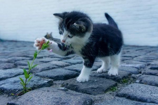 Bubeck-Katze-Blume