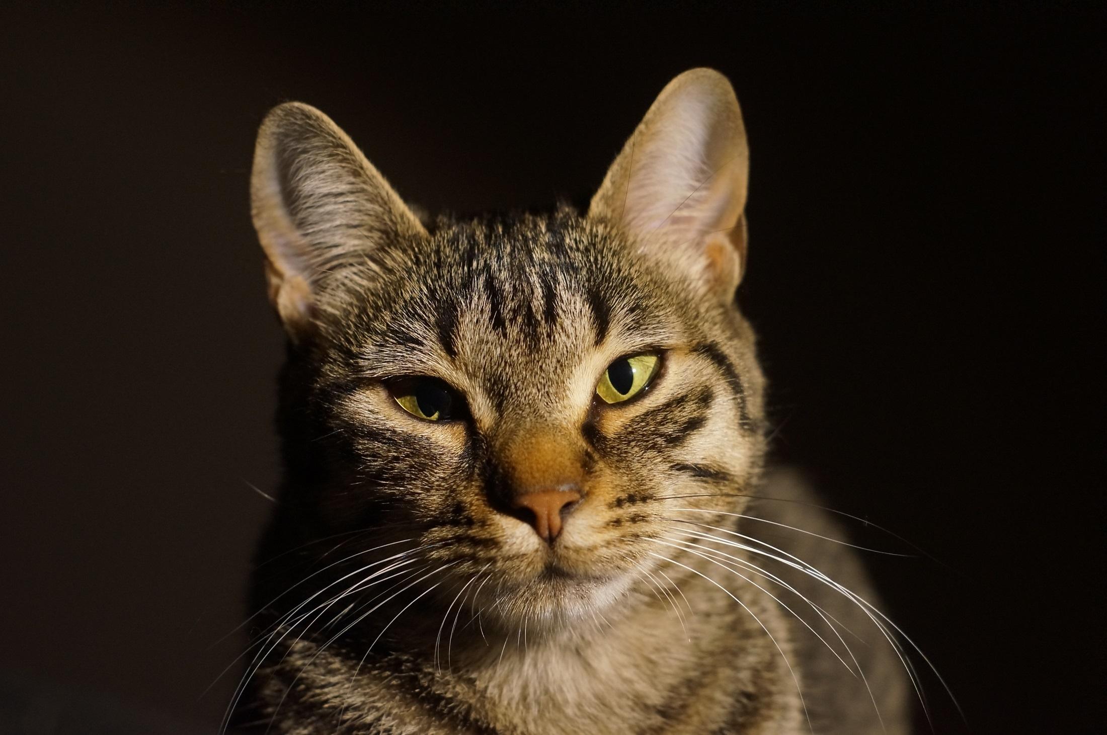 Katzenschnupfen – Behandlung, Symptome und Ursachen