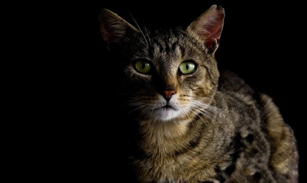 Bubeck-Katze-Nacht